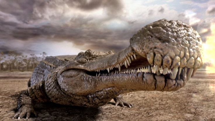 Extinct 40 ft. Crocodile: Sarcosuchus