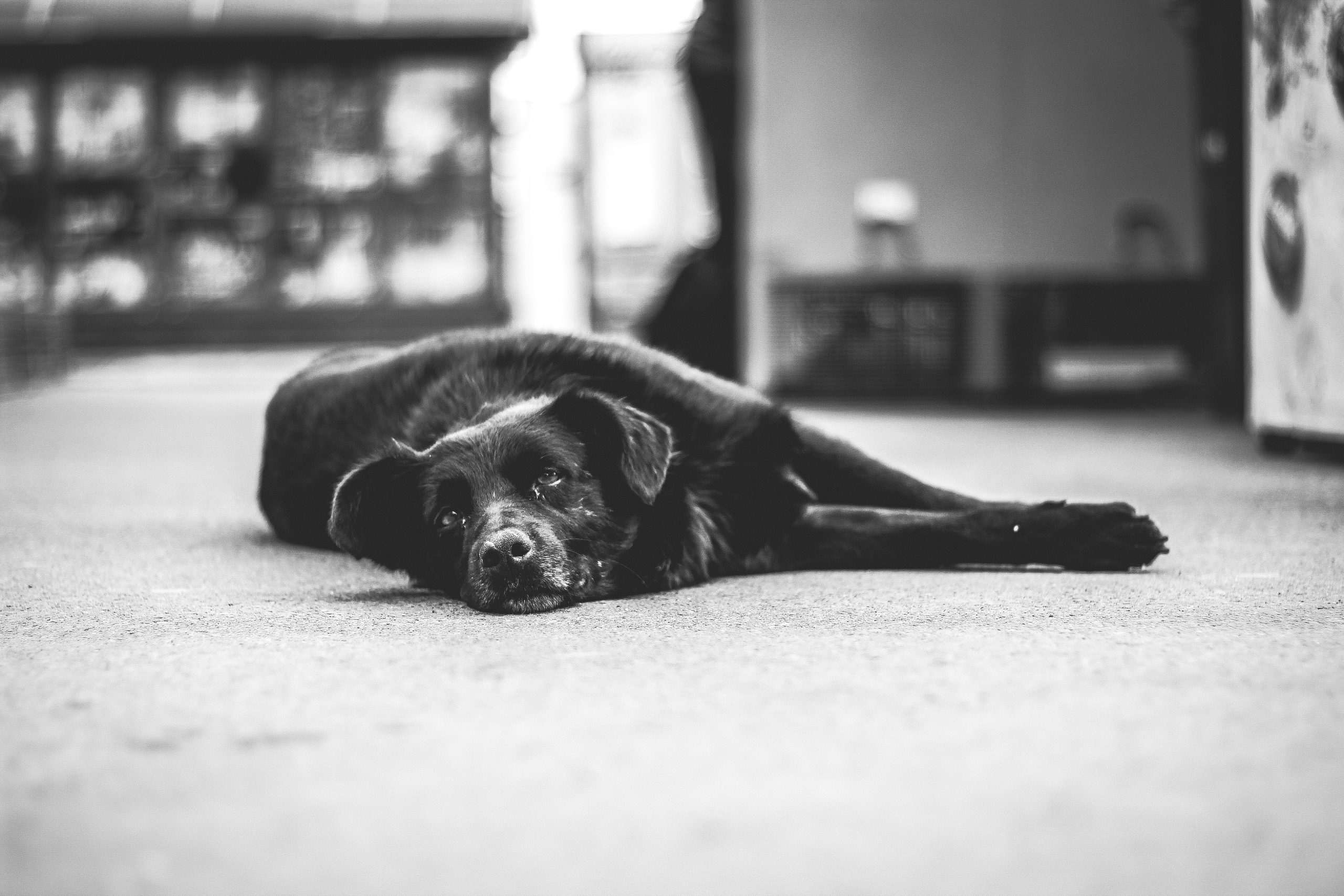 What's A Christian View on Pet Euthanasia?